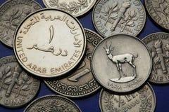 Moedas de Emiratos Árabes Unidos Fotografia de Stock Royalty Free