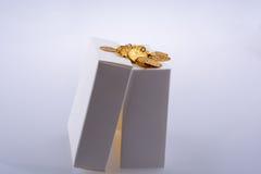 Moedas de ouro falsificadas em uma caixa Fotos de Stock Royalty Free