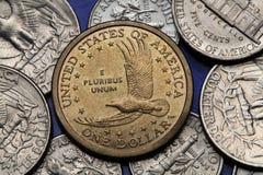 Moedas dos EUA Dólar de Sacagawea Fotografia de Stock