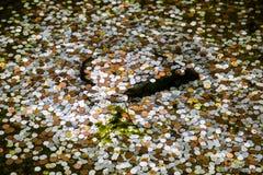 Moedas em uma lagoa em Kyoto, Japão para a boa sorte Fotografia de Stock