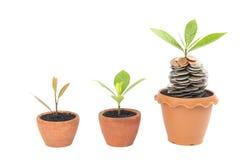 Moedas no solo com planta nova Fotografia de Stock