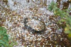 Moedas sob a água no jardim do bordo fotografia de stock royalty free