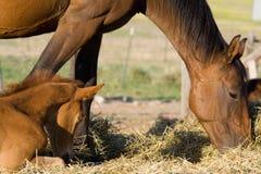 Moeder & Kind Stock Afbeelding