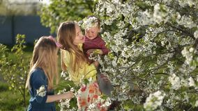 Moeder die met jonge geitjes bloeiende kersenboom ruiken stock video