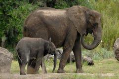 Moeder en baby 2 van de olifant Royalty-vrije Stock Afbeeldingen