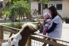 Moeder en baby bij dierenlandbouwbedrijf Stock Afbeelding