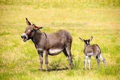 Moeder en Baby Burro stock foto