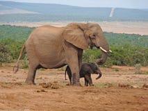 Moeder en Babyolifant Royalty-vrije Stock Foto's