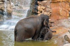 Moeder en babyolifant het spelen in het water Stock Foto's