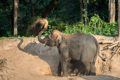 Moeder en babyolifanten het spelen Stock Fotografie