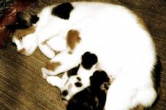Moeder en babys Stock Fotografie
