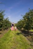 Moeder en dochter in Boomgaard Royalty-vrije Stock Fotografie