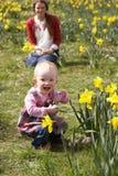 Moeder en Dochter op het Gebied van de Gele narcis Royalty-vrije Stock Afbeeldingen