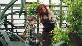 Moeder en dochter spreken de moderne landbouwers, lachen en hebben pret terwijl het controleren van installaties in serre Familie stock footage