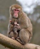 Moeder en haar babyaap royalty-vrije stock afbeeldingen