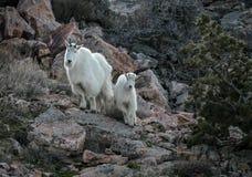 Moeder en haar jong geitje royalty-vrije stock foto