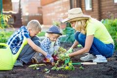 Moeder en haar zonenkinderen die aardbei op het gebied van de huistuin planten Stock Afbeelding