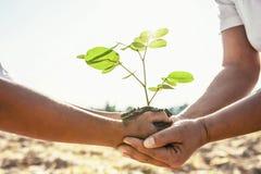 moeder en kinderen die plantend jonge boom helpen royalty-vrije stock foto