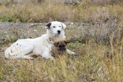 Moeder en puppy Royalty-vrije Stock Afbeelding
