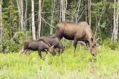 Moeder en twee jonge geitjes Royalty-vrije Stock Foto's