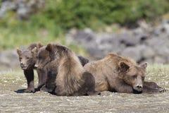 Moeder en twee welpen het rusten Royalty-vrije Stock Afbeelding
