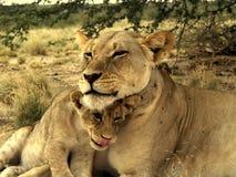 Moeder en zoon royalty-vrije stock fotografie