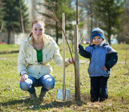 Moeder en zoon die boom planten Stock Afbeelding