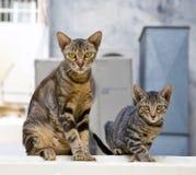 Moeder en zoon van een kattenfamilie Royalty-vrije Stock Afbeeldingen
