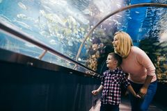 Moeder en zoons het letten op het overzeese leven in oceanarium royalty-vrije stock afbeelding