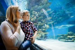 Moeder en zoons het letten op het overzeese leven in oceanarium royalty-vrije stock fotografie