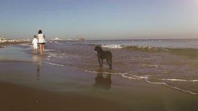 Moeder en zoonsgang langs de handen van de zeekustholding met hun hond stock videobeelden