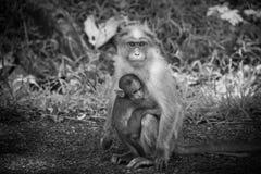 Moeder en zoonsliefde Stock Foto