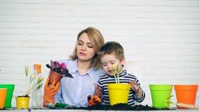 Moeder en zoonszorg voor geplante bloemen Concept zorg voor bloemen stock videobeelden