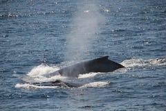 Moeder met haar kind van de babywalvis stock fotografie