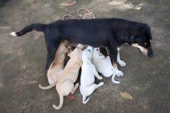 moeder met puppy Royalty-vrije Stock Fotografie