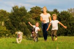 Moeder met twee jongens en twee hondenlooppas over een weide Royalty-vrije Stock Foto's