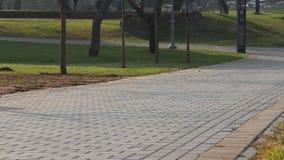 Moeder met wandelwagengangen in het park stock videobeelden