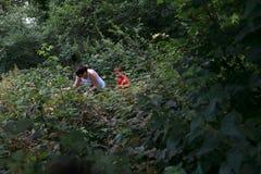 Moeder met zoon het plukken frambozen stock fotografie