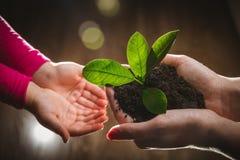 Moeder` s hand die jonge boom geven aan een kind voor het planten samen op groene aardachtergrond stock fotografie