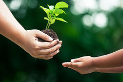 Moeder` s hand die jonge boom geven aan een kind voor samen het planten stock foto