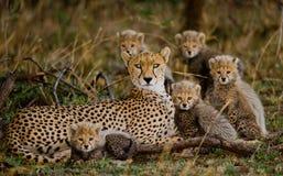 Moederjachtluipaard en haar welpen in de savanne kenia tanzania afrika Nationaal Park serengeti Maasai Mara stock fotografie