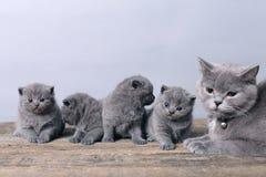 Moederkat die haar katjes behandelen Royalty-vrije Stock Afbeelding