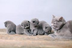 Moederkat die haar katjes behandelen Stock Afbeeldingen