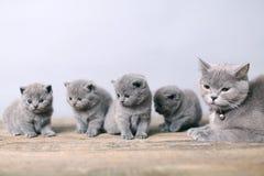 Moederkat die haar katjes behandelen Stock Fotografie