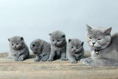 Moederkat die haar katjes behandelen Stock Foto