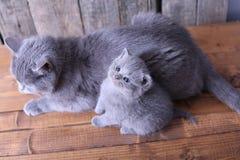 Moederkat die haar katjes behandelen Royalty-vrije Stock Fotografie