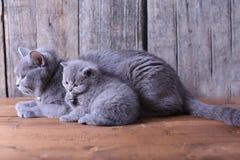 Moederkat die haar katjes behandelen Royalty-vrije Stock Foto
