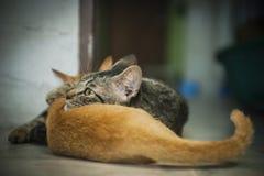 Moederkat en haar katje Stock Foto