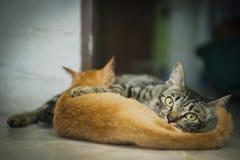 Moederkat en haar katje Stock Foto's
