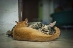 Moederkat en haar katje Stock Afbeelding